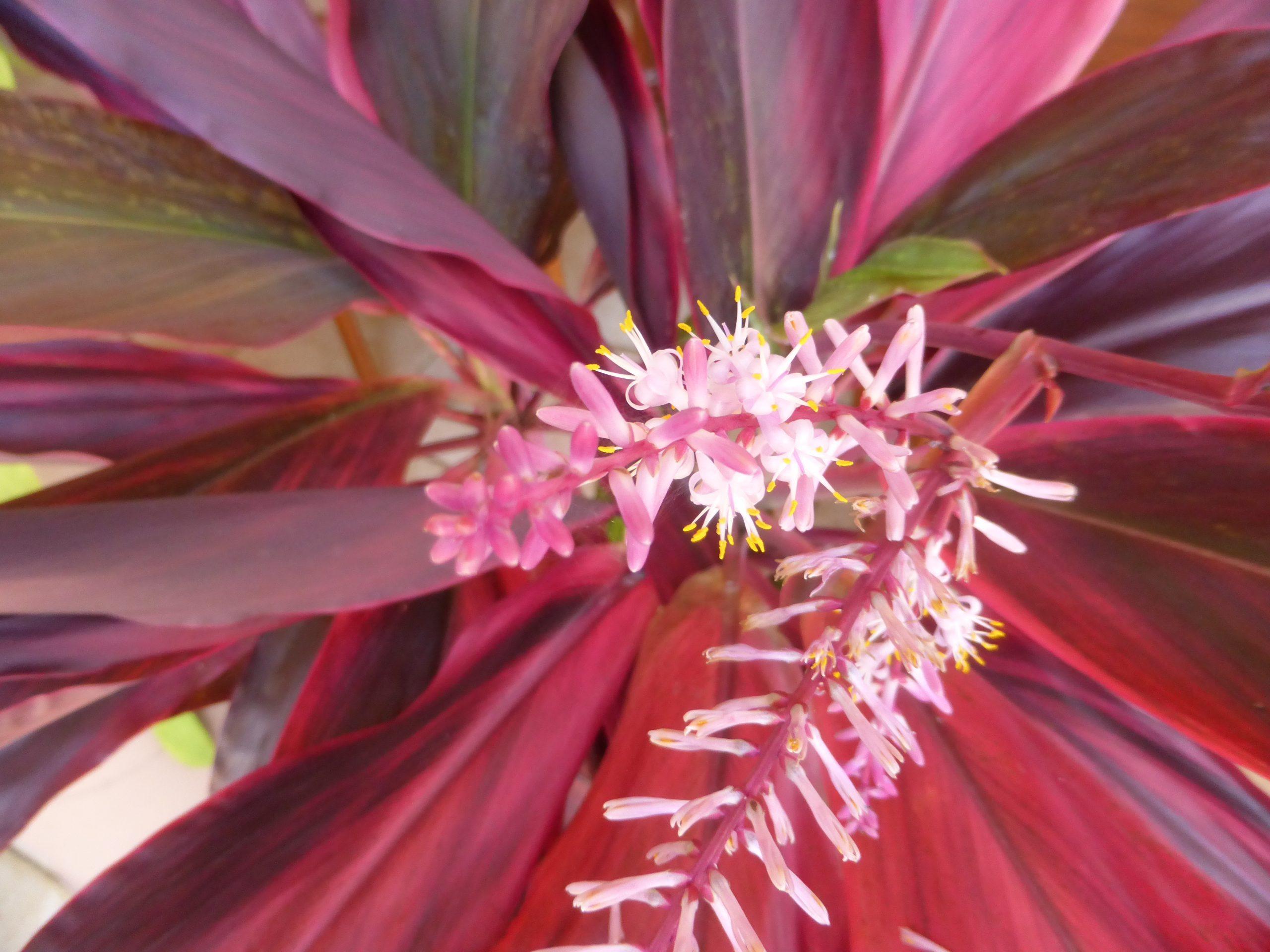 Le modèle des plantes: ancrage et abondance