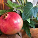 punica-granada-fruit