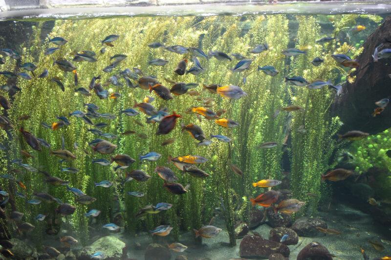 Des poissons exotiques à Aquatis