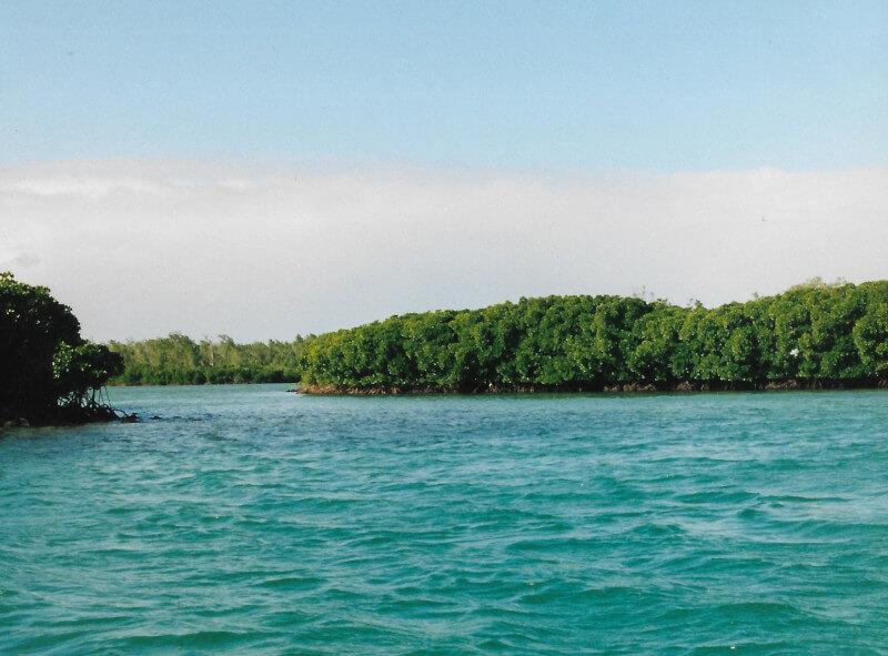 La Mangrove à l'île aux cerfs
