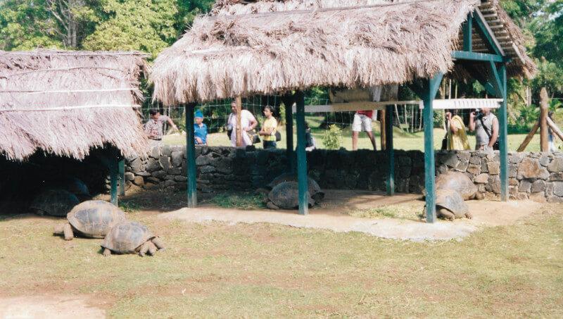 Les tortues du jardin de Pamplemousses