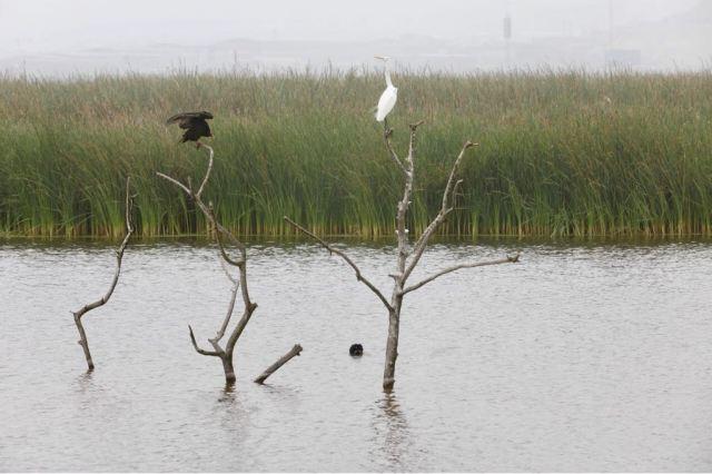 En los Pantanos de Villa, Lima promueve el cuidado de las aves