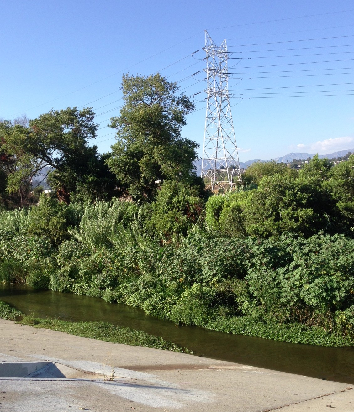 The Glendale Narrows stretch of the Los Angeles River. Though the sides are concrete, the earth bottom supports tall trees growing in a largely natural river. Photo by Joe Linton/Streetsblog L.A.