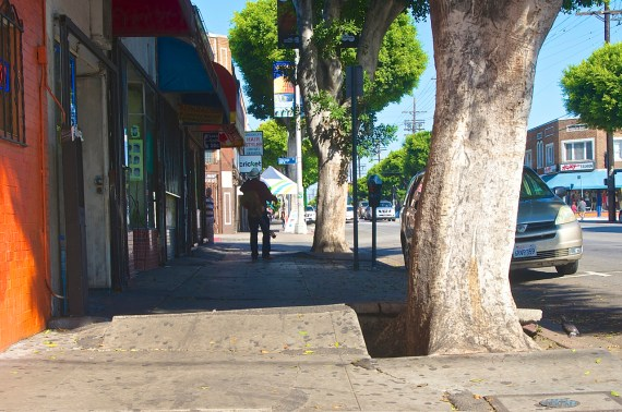Trees provide wonderful shade but have destroyed the sidewalks along Cesar Chavez. Sahra Sulaiman/Streetsblog L.A.