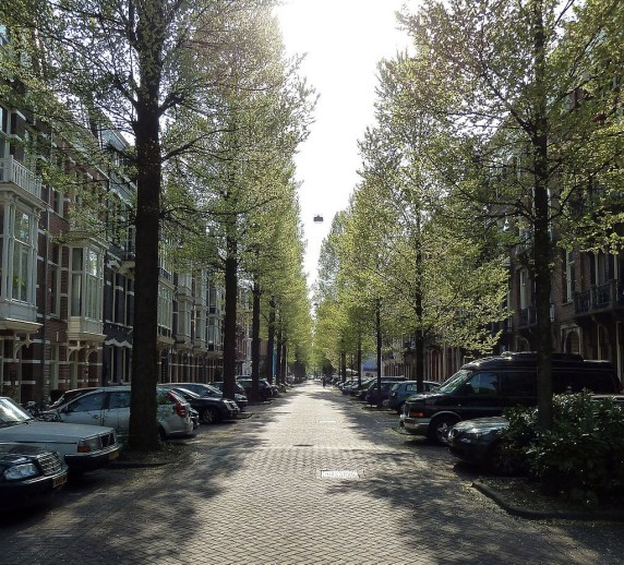 Tree-lined street in Amsterdam. Photo by Rob Young via Wikimedia