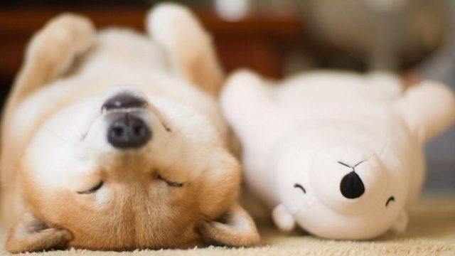 Los perros y los humanos somos los mejores amigos desde hace 11 mil años