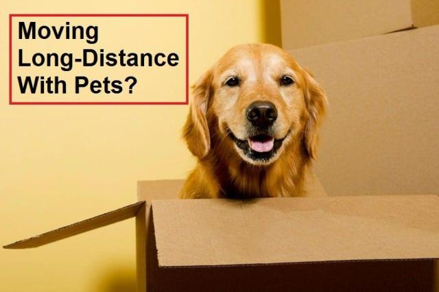 moving long-distance with pets