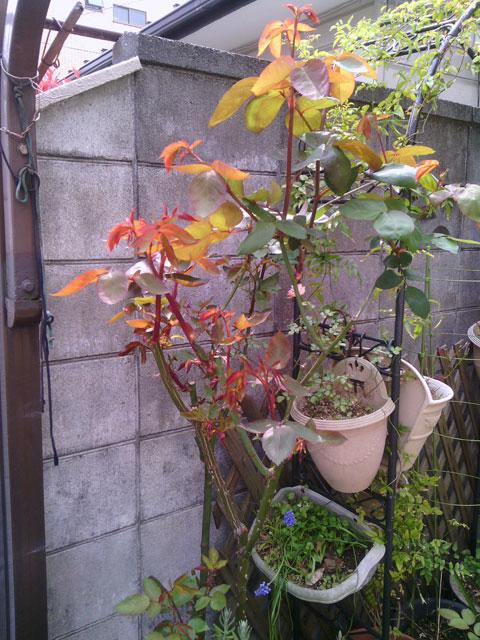 2013-03-29_garage-rose