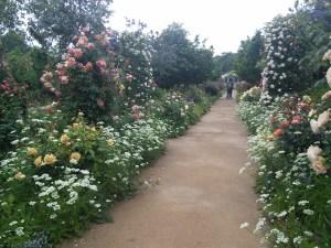 the-treasure-garden-rose-road2