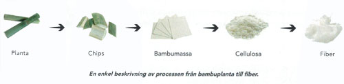 bambu-planta-fiber