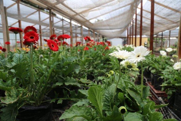 floricultoras