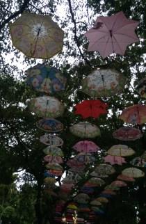 umbrellas(1)