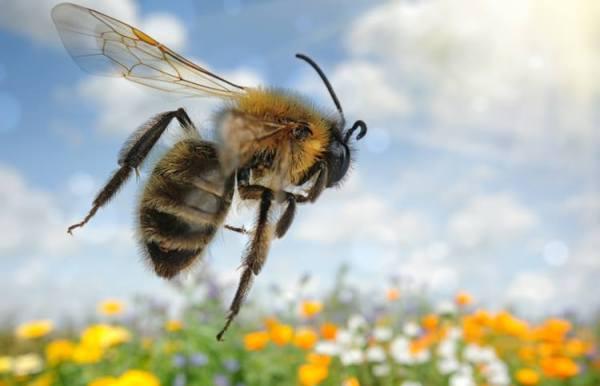 bee flyng