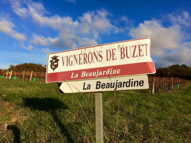 La Beaujardine is surrounded by vineyards