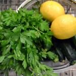 Frittelle di Zucchini – Zucchini Fritters