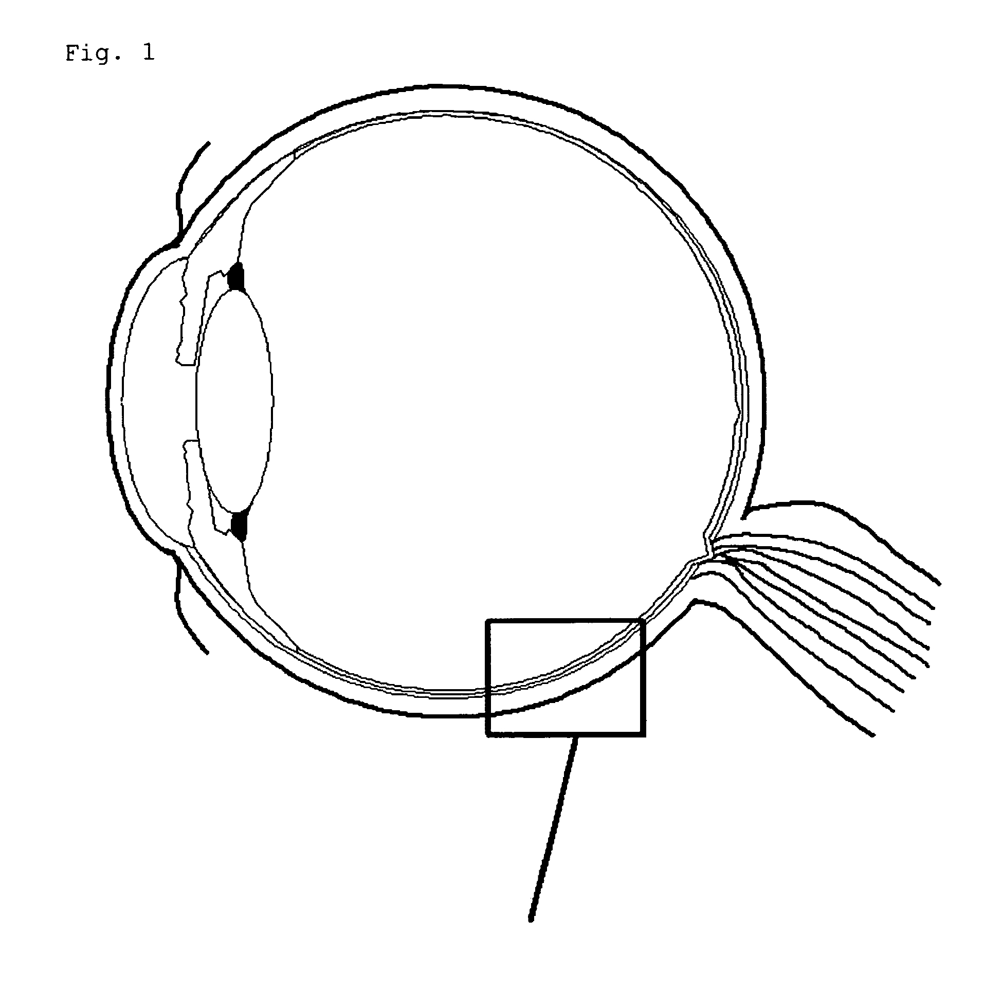 Diagram Of The Human Eye Without Labels