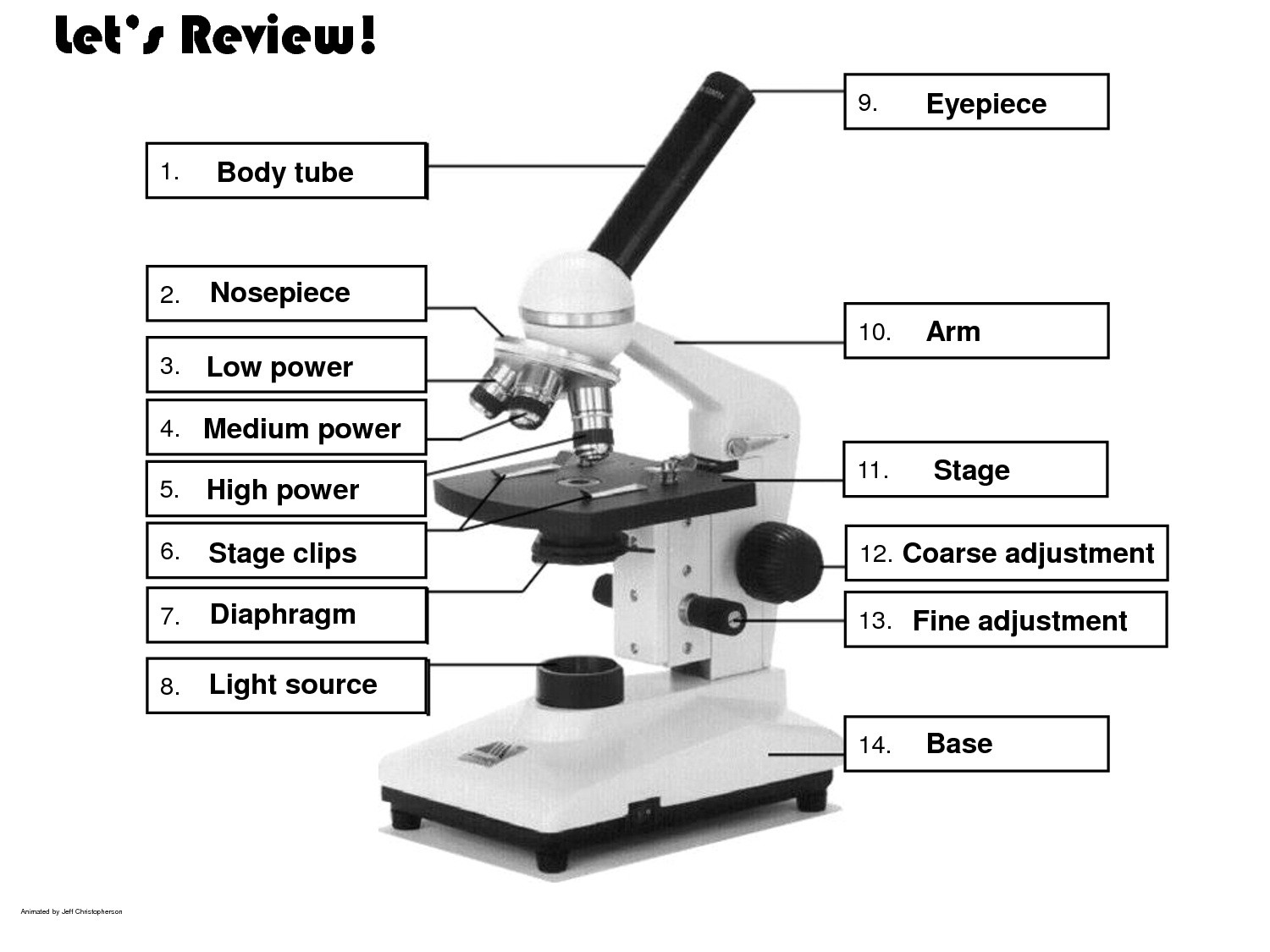 Compound Light Microscope Labeled