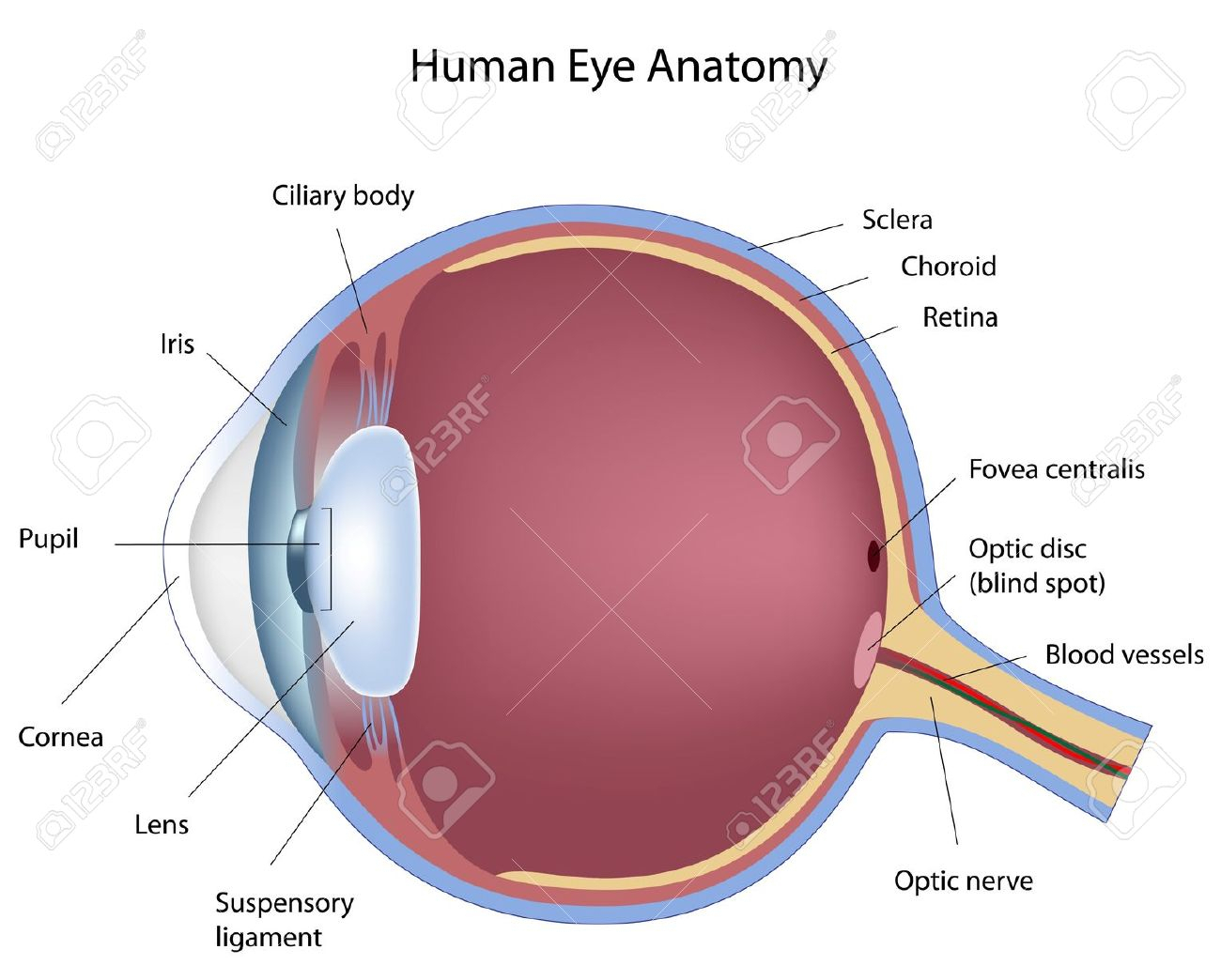 Label The Eye Diagram