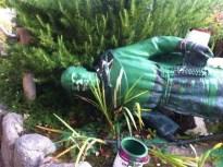 statua abbattuta di san Junípero Serra