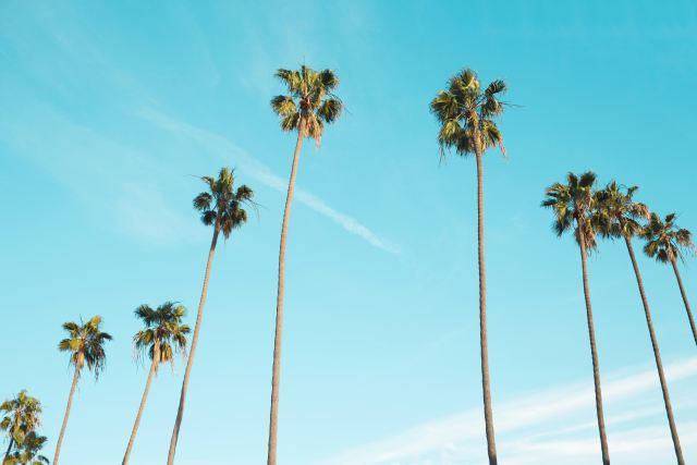 Summer with blue sky and palm tree