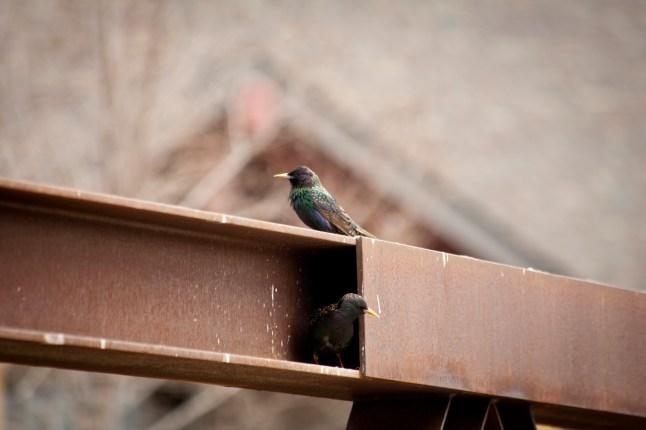 Belle place pour un nid!