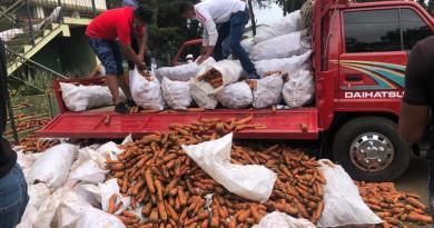Disaster de la zanahoria: Productores advierten que autoridades no cumplen