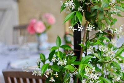 Terrace Jasmine