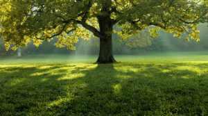 Les bienfaits de la nature sur la santé