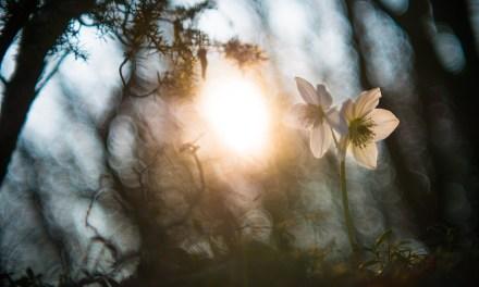 """""""La Chiave della Vita"""" e l'equinozio di primavera"""