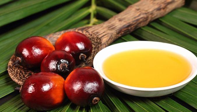 ¿Qué ocurre realmente con el aceite de palma?