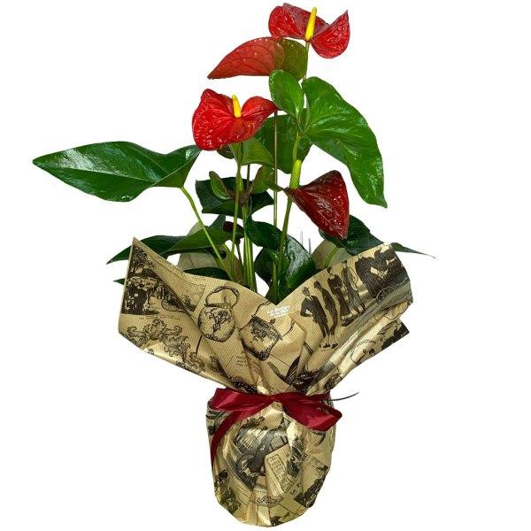 planta-anthurium-anturio