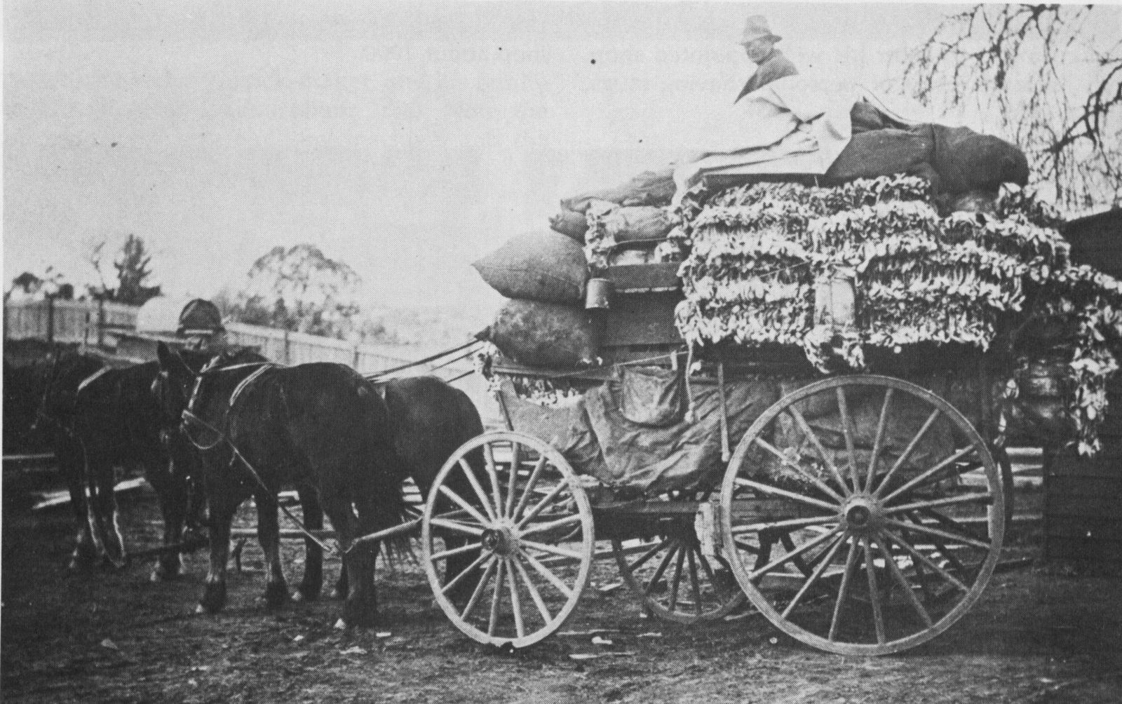 The Rabbit Industry in South-East Australia, 1870-1970 - LABOUR