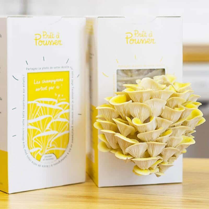 Kit champignons le kit pleurote gris de pr t pousser - Cuisiner des pleurotes ...