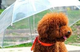 Parapluie pour chien