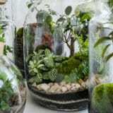 Small decoration plants in a glass bottle/garden terrarium bottl