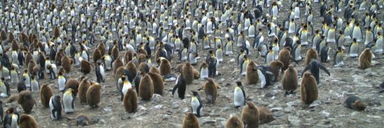 penguinwatch