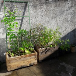 Potager cour Tiphaine