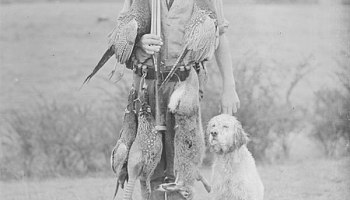 Using a labradoodle for hunting Why do Labradoodles Dig can bernedoodles hunt can irish doodles hunt