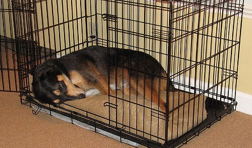 crate training a labradoodle puppy checklist