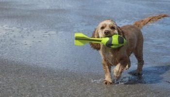 Labradoodle toys training brain games for labradoodles labradoodle puppy checklist