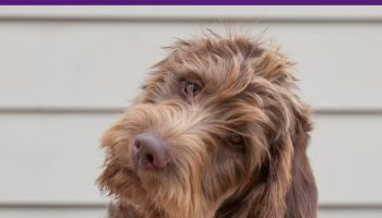 BEST DOG DNA TEST FOR MUTTS