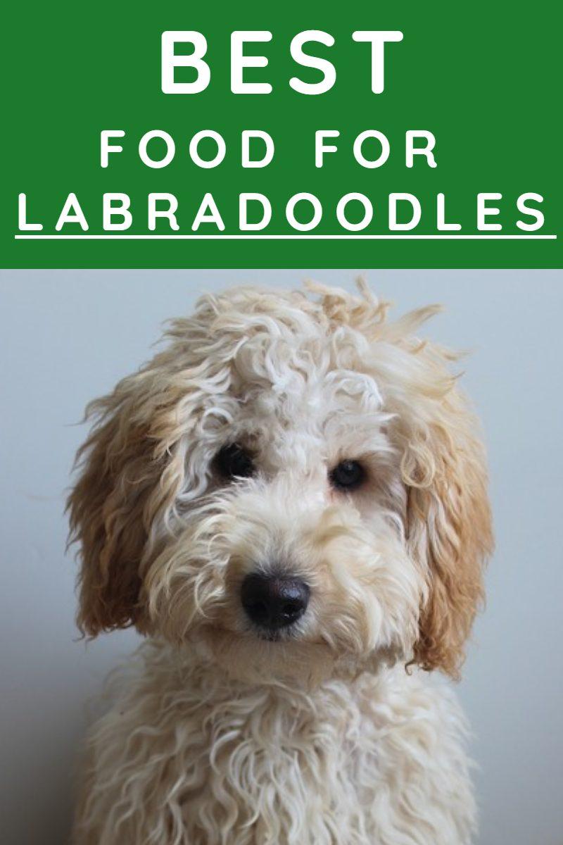 BEST FOOD FOR LABRADOODLES