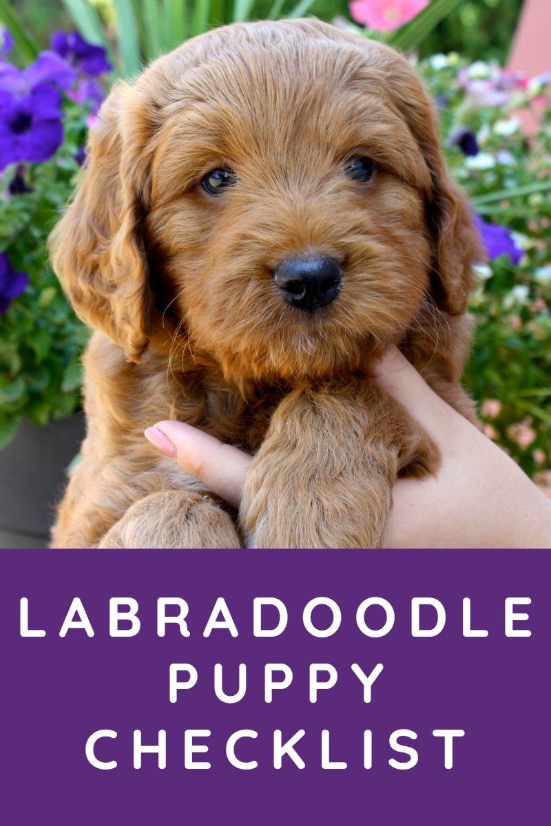 labradoodle puppy checklist