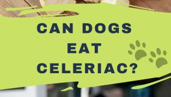 Can Dogs Eat Celeriac