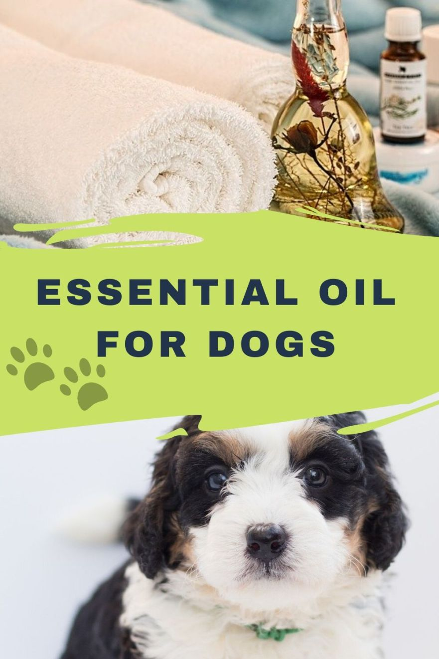 are essential oils ok for dogs