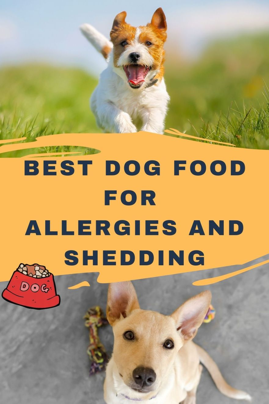 Best dog food for allergies and shedding