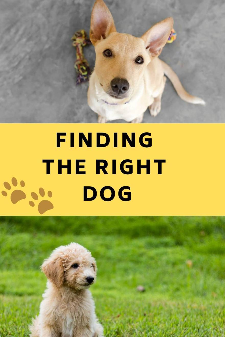 Finding the Right dog