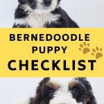 Bernedoodle Puppy Checklist The Ultimate Guide