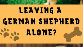 Can a German Shepherd be left alone