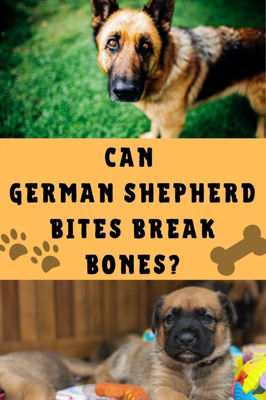 Can a German Shepherd bite break bones